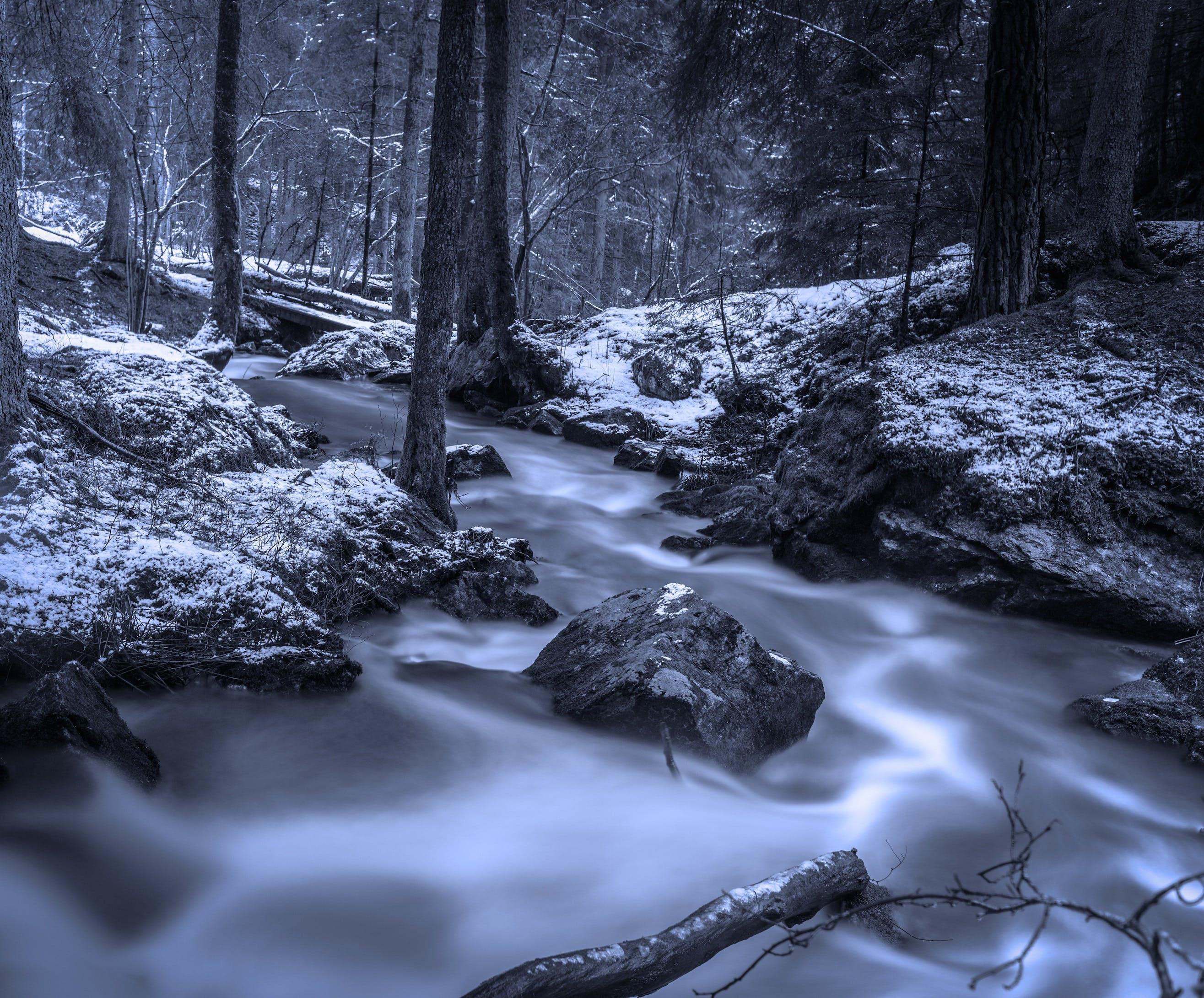 コールド, パーク, モーション, 冬の無料の写真素材