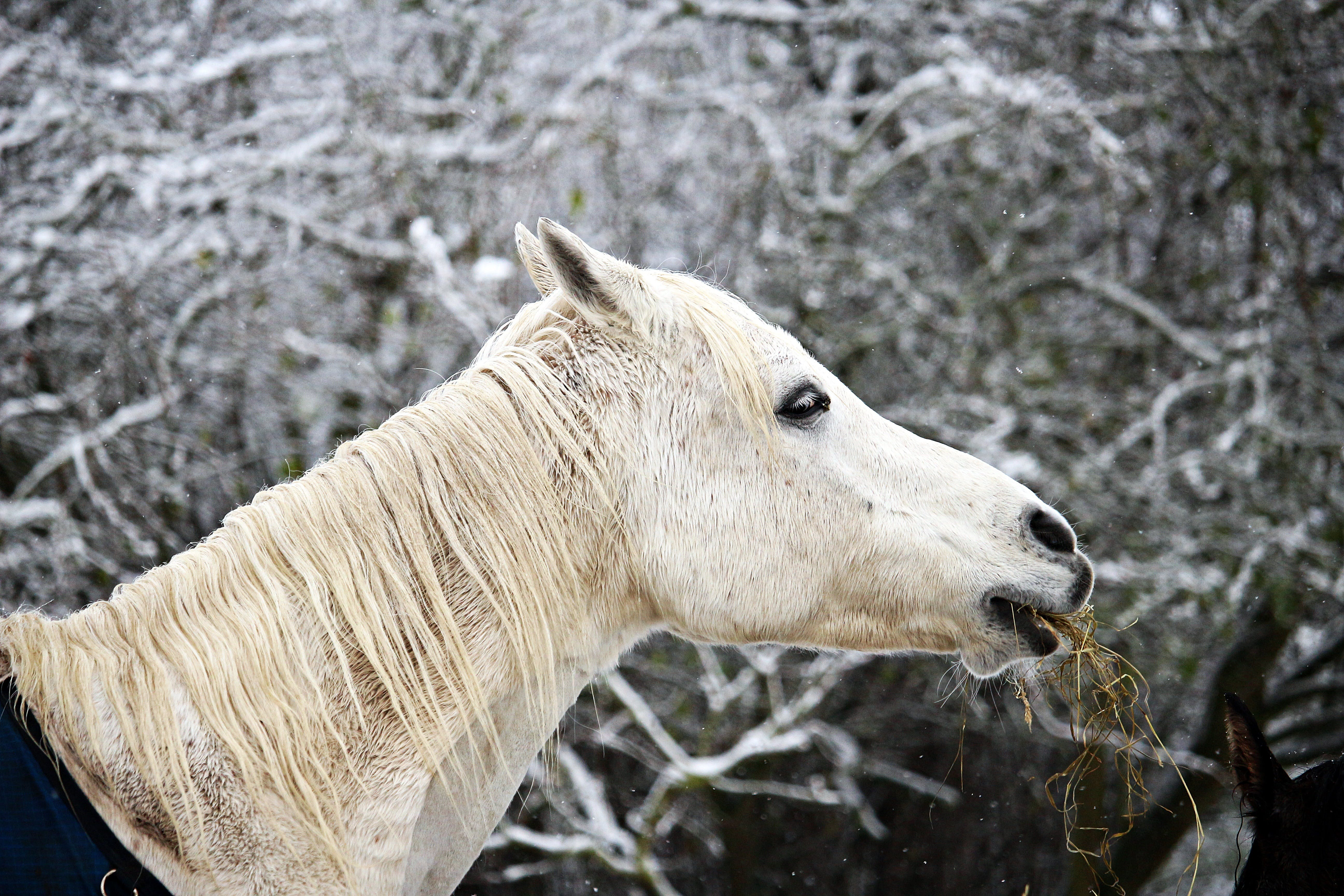 Free stock photo of snow, winter, horse, frost