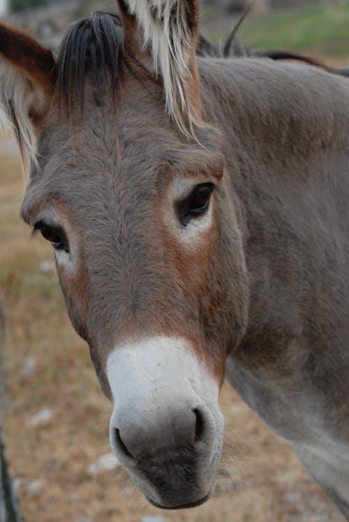 Photos gratuites de âne, baudet, terrier