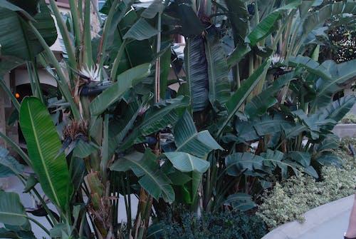 Photos gratuites de feuilles tropicales