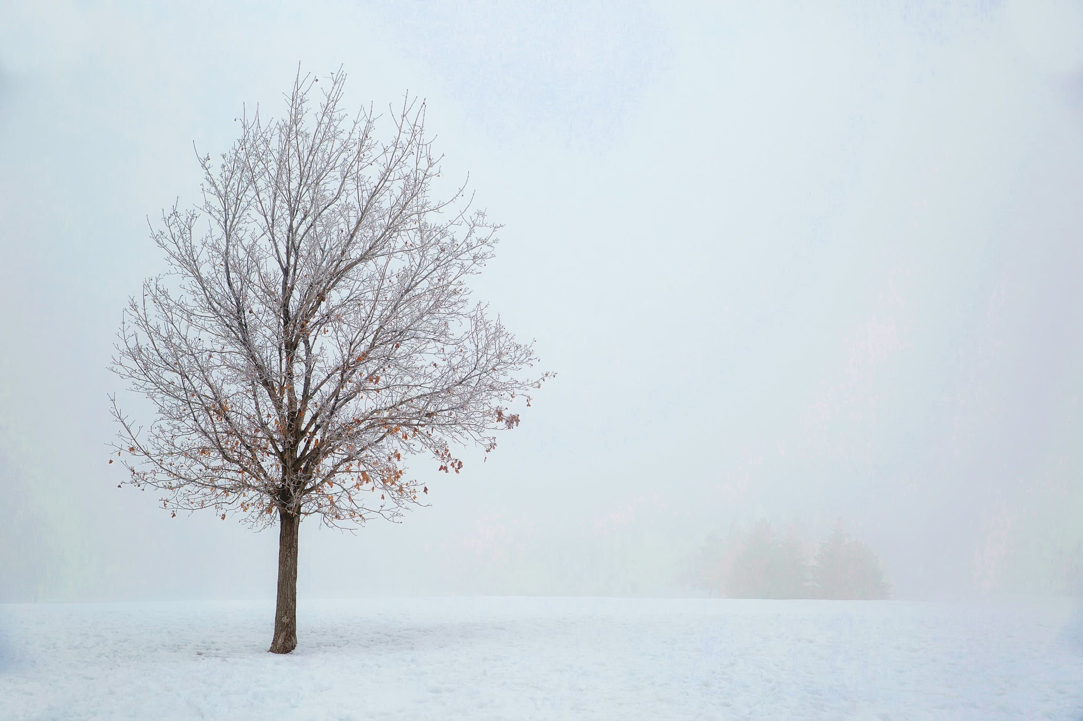 Free stock photo of snow, landscape, nature, winter