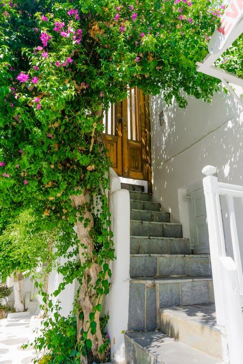 Fotos de stock gratuitas de flores floreciendo, Grecia, Mykonos, pasos