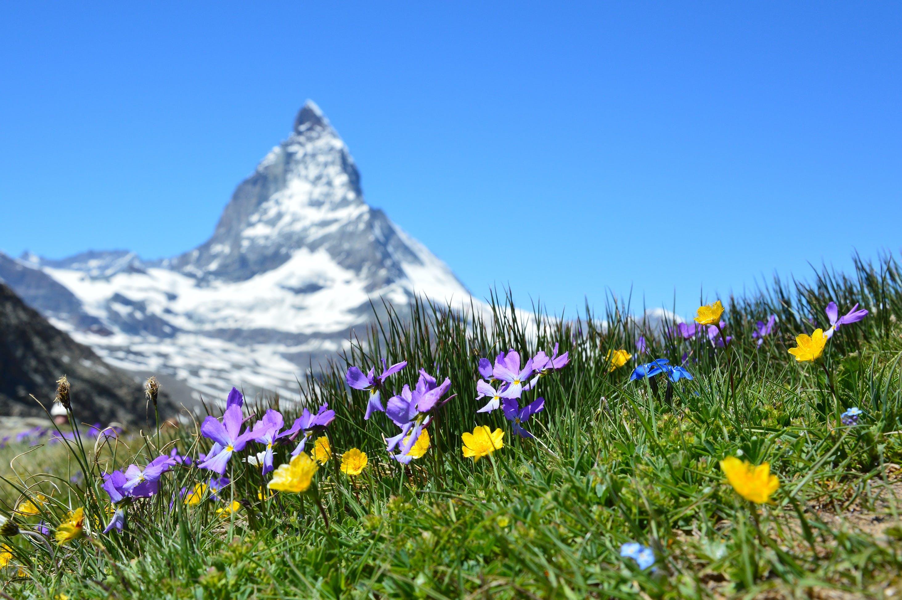 Petaled Flower on Grass Near Mountain ]