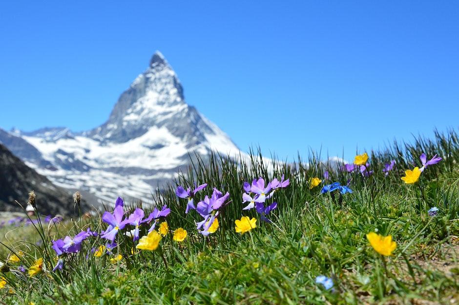alpine, beautiful, bloom