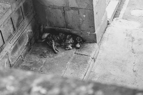 Бесплатное стоковое фото с Аллея, собака, спать, уличный пес