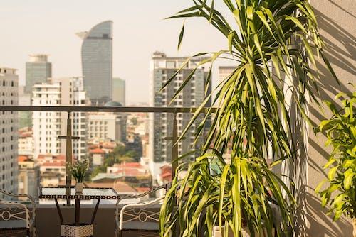 屋頂, 柬埔寨, 池, 游泳 的 免費圖庫相片
