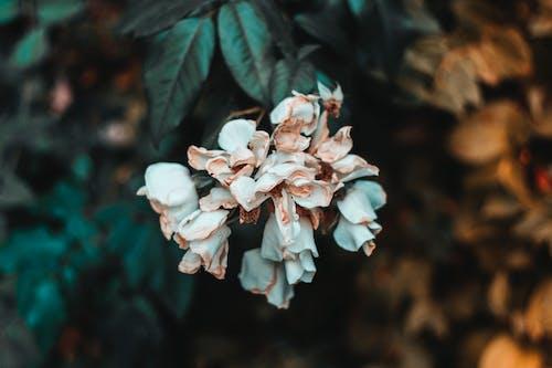Photos gratuites de brandon woelfel, choc, double, fleurs