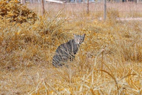 Darmowe zdjęcie z galerii z kot