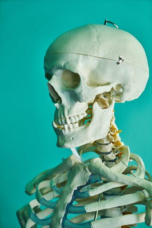 Immagine gratuita di anatomia, attrezzatura medica, bianco, biologia