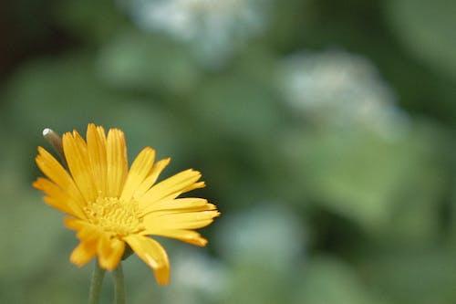 คลังภาพถ่ายฟรี ของ ธรรมชาติ, ผักใบเขียว, วัน, หญ้า