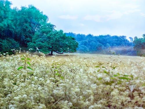 Photos gratuites de arbres, autriche, champ, champ de fleurs