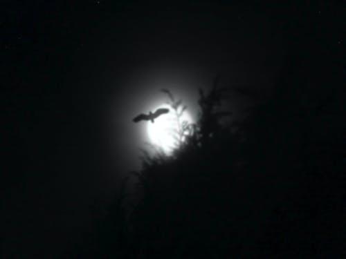抽象背景, 晚上, 月亮, 模糊的 的 免費圖庫相片