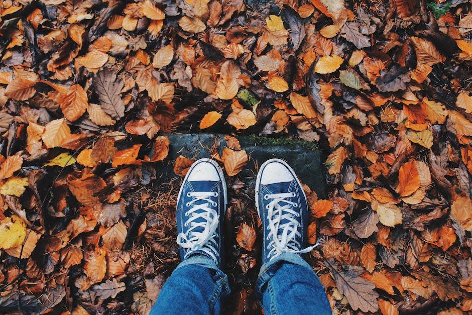 autumn, close-up, color