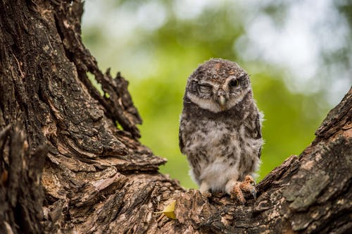 Selective-focus Photograph of Owl on Tree