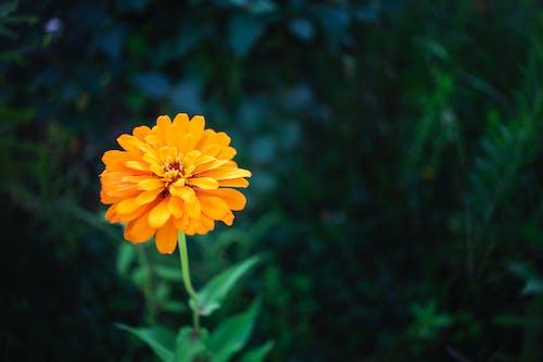 คลังภาพถ่ายฟรี ของ ความงาม, ความปิติยินดี, ง่าย, ดอกไม้