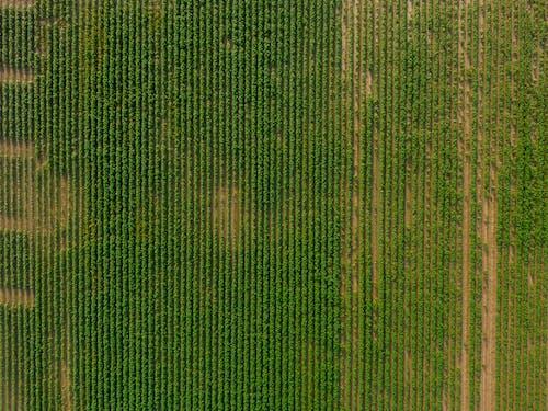 คลังภาพถ่ายฟรี ของ การเกษตร, นา, พื้นหลัง, ภาพพื้นหลัง