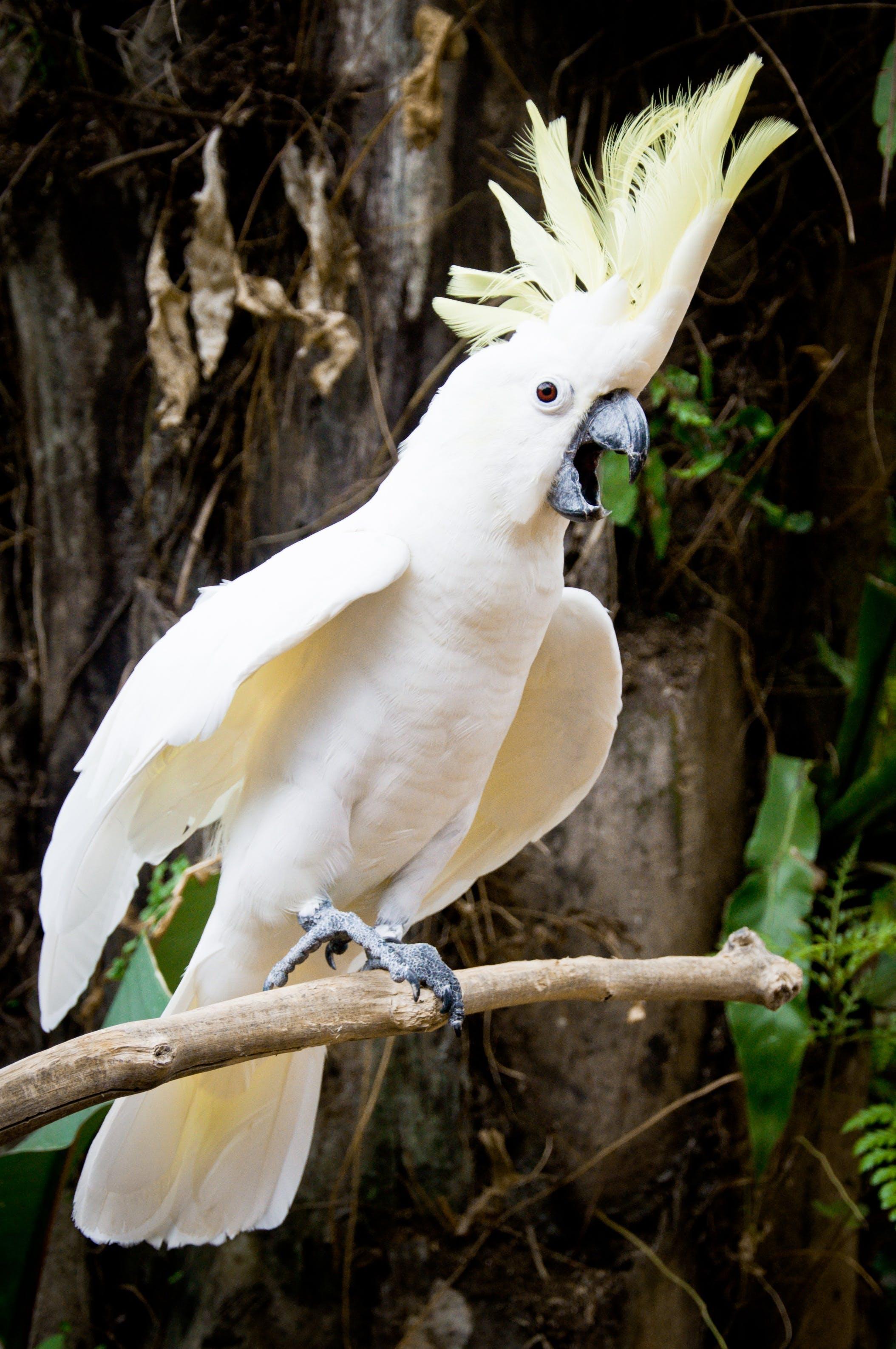 Free stock photo of bird, forest, animal, zoo