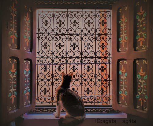 Kostenloses Stock Foto zu #cat #art #window #view #africa #marrakech