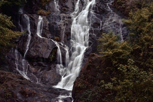 Foto stok gratis #nature #waterfall #trees #photography