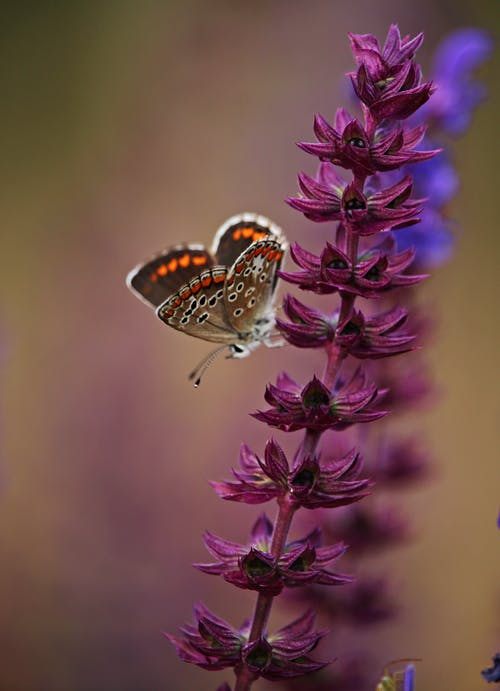 Selective Focus Photo of Butterfly Perching on Purple Flower