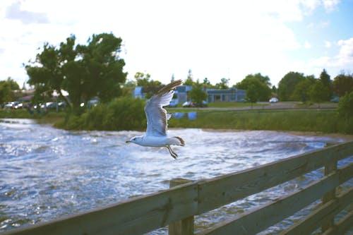 Free stock photo of bird, destroir, destroirphotography, fence