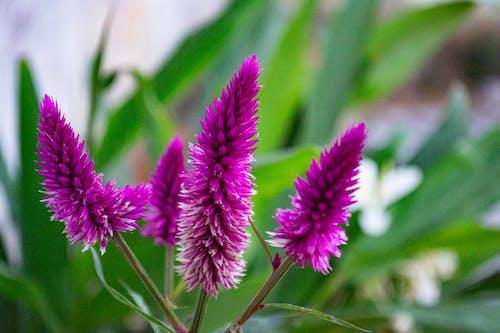 Základová fotografie zdarma na téma detail, flor, kytka, list