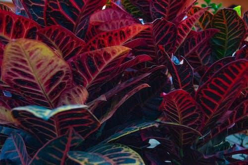 녹색, 이파리, 자연, 클로즈업의 무료 스톡 사진