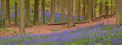 Ảnh lưu trữ miễn phí về cây, danh lam thắng cảnh, hệ thực vật, hoa