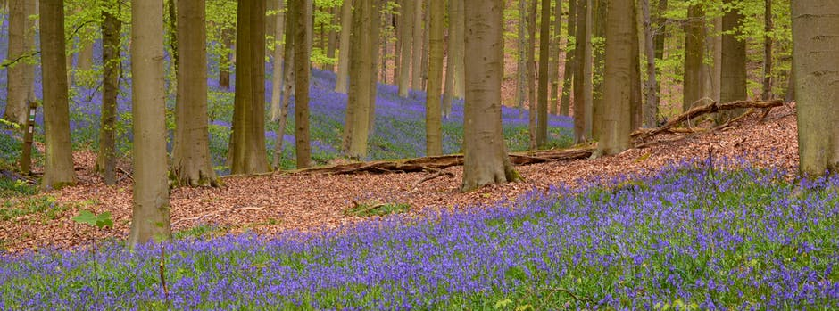 flora, flowers, forest