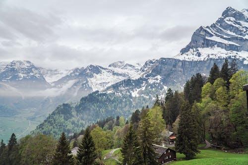 Ilmainen kuvapankkikuva tunnisteilla 4k taustakuva, Alpit, flunssa, havupuut