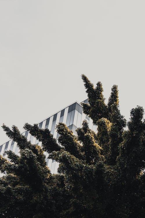 Δωρεάν στοκ φωτογραφιών με δέντρα, Εξωτερικός χώρος, θέσεις