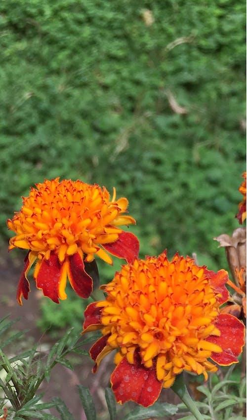 mobilechallenge, 園林花卉, 戶外挑戰, 漂亮 的 免費圖庫相片