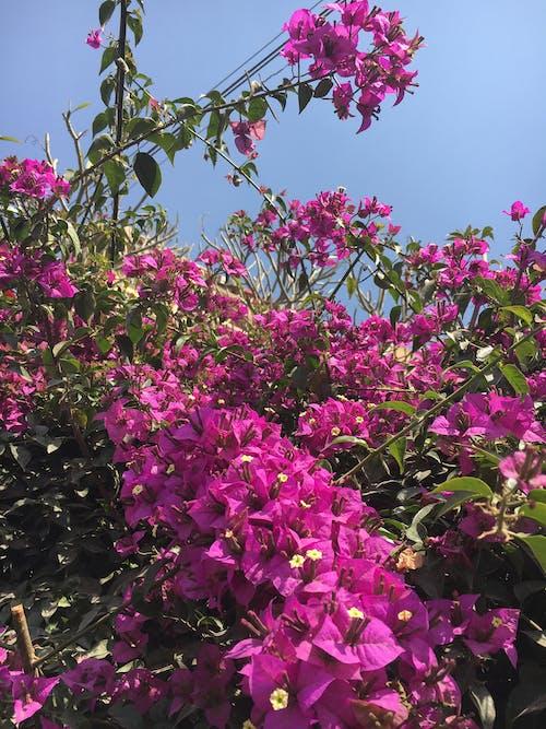 mobilechallenge, 人造花, 假花, 園林花卉 的 免費圖庫相片
