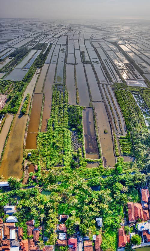 Aerial View of Rice Field Near Houses