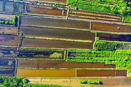 Top View Photo of Farmland