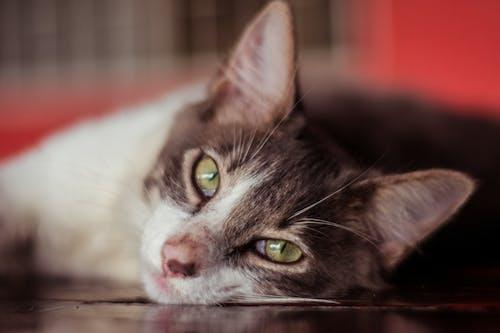 Evcil Hayvanlar, Fotoğraf, fotoğrafçılık, kamera içeren Ücretsiz stok fotoğraf