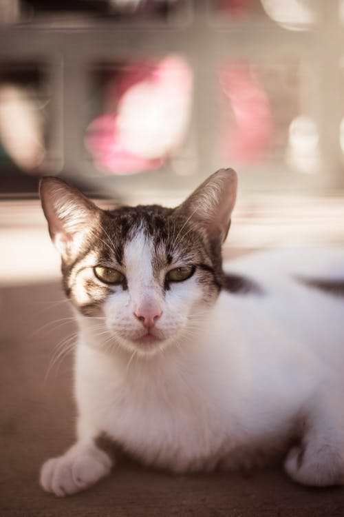 Fotoğraf, fotoğrafçılık, kamera, kedi içeren Ücretsiz stok fotoğraf