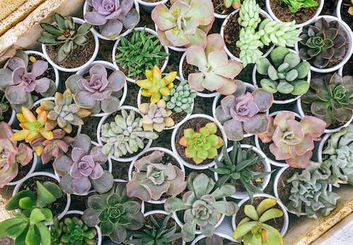 Fotobanka sbezplatnými fotkami na tému dalat, kaktus, kvet, príroda