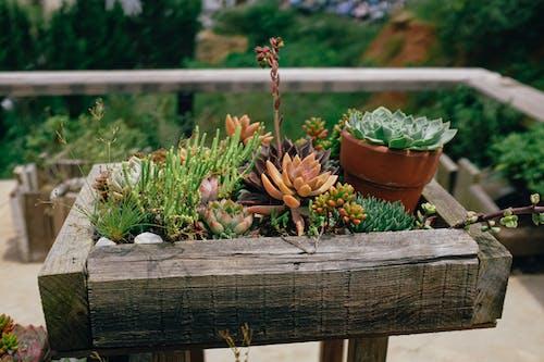 Ilmainen kuvapankkikuva tunnisteilla dalat, kaktus, kasvi, kukka