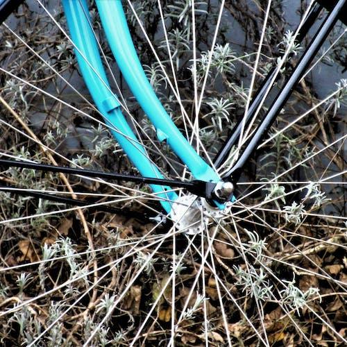 Ảnh lưu trữ miễn phí về xe đạp trong bụi rậm
