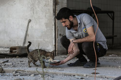 Free stock photo of bomb, cats, human, idlib