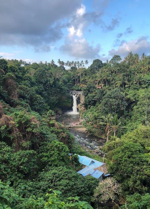 Бесплатное стоковое фото с вид, водопад, деревья, джунгли