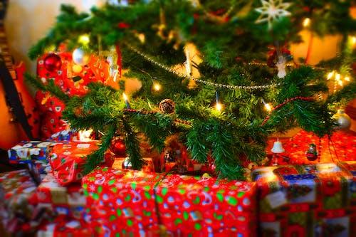 Free stock photo of christmas, christmas tree, gifts, presents