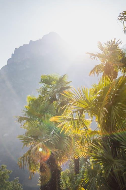 Imagine de stoc gratuită din arbore, călătorie, concediu, exotic