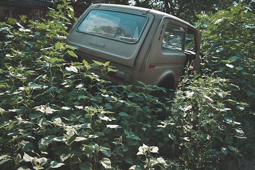 Foto stok gratis alam, kendaraan, mobil, rumput