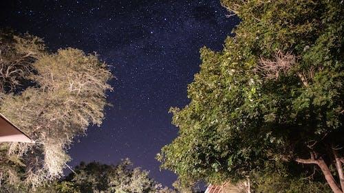 gece, ünlüler içeren Ücretsiz stok fotoğraf