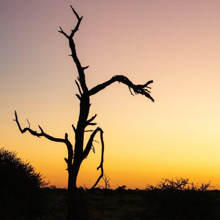 arbre, coucher de soleil, coucher du soleil