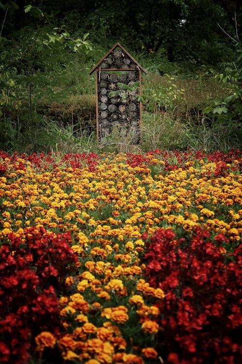 Imagine de stoc gratuită din câmp de flori, flori frumoase