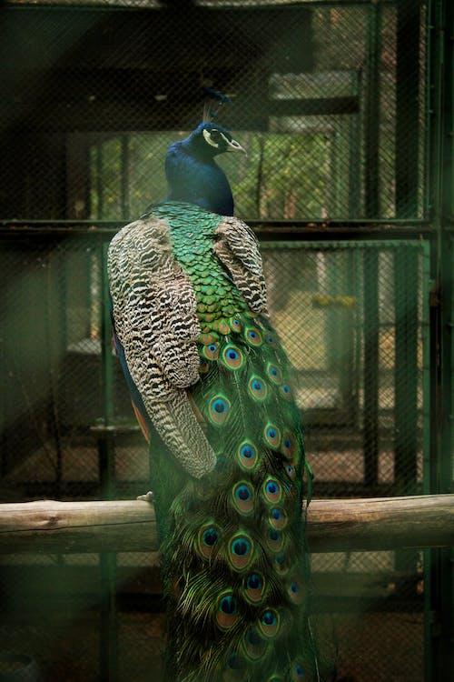 Imagine de stoc gratuită din colivie, pasăre