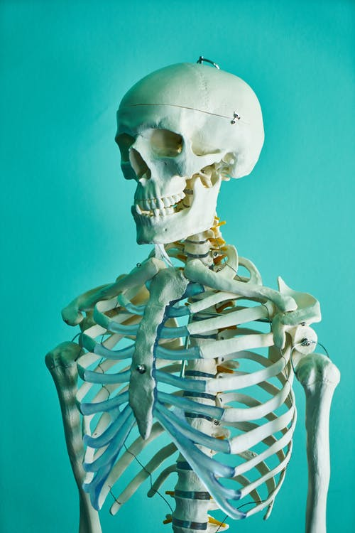 anatomia, biologia, cabeça